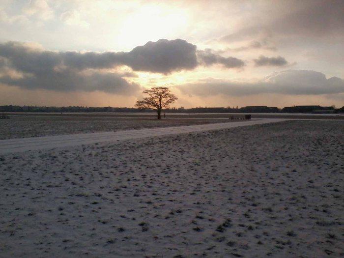 Baum auf dem Tempelhoferfeld _ew
