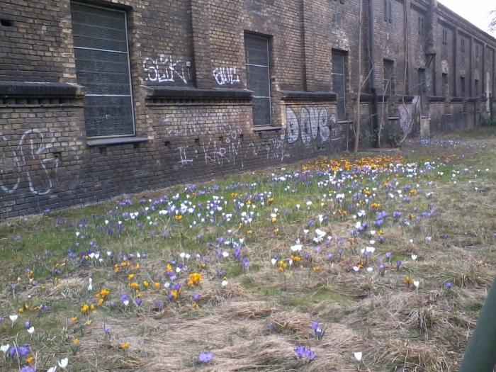 Blumen vor der Mauer 2012-03-18 _ew