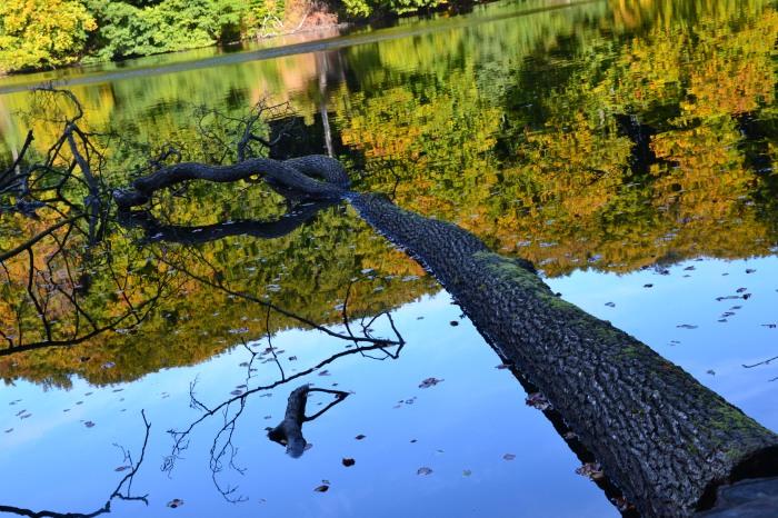 Baum im Wasser 300913 _ew